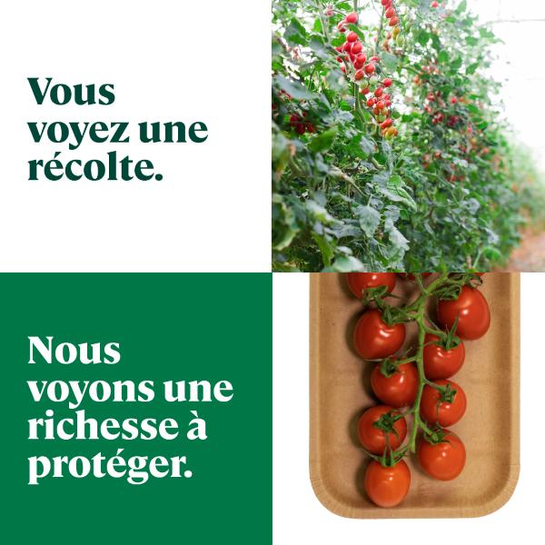 Concours Gagnez Une Carte Cadeau De 100 $ Chez L'épicier De Votre Choix!